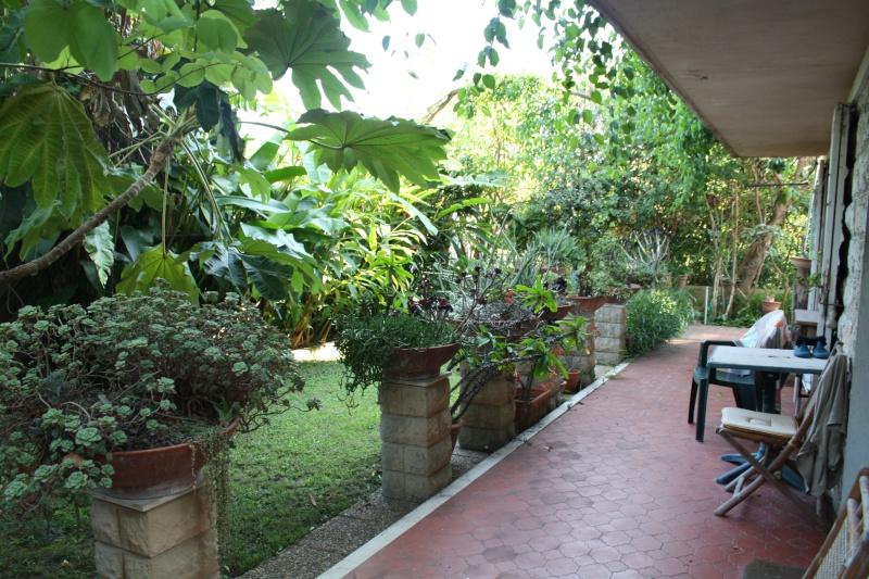 les succulentes chez Jean 06 Ma_ter10