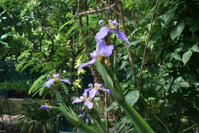 Fleurs de début d'été Neomar10