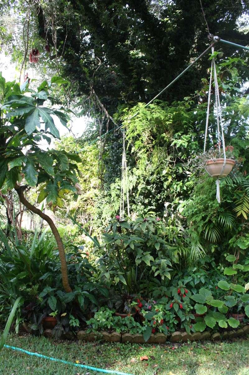 Ficus pumila - Page 4 Olivie10
