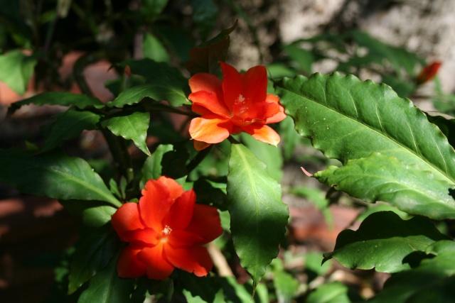 Fleurs de début d'été Peresk10