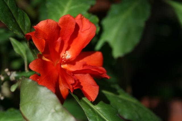 Fleurs de début d'été Peresk11