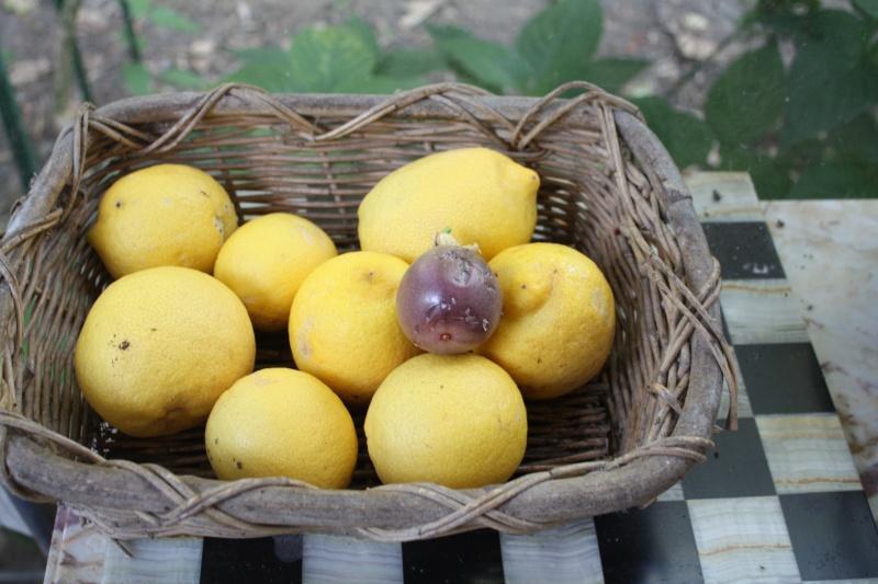 fruits de la passion et citrons Premie10