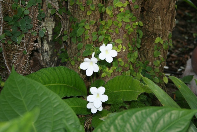 Encore des fleurs que j'aime bien: Strept11