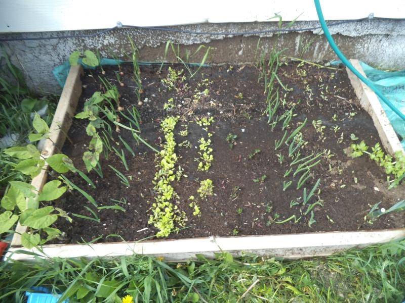 Le petit jardin de poche Ignacien! Dscf1318