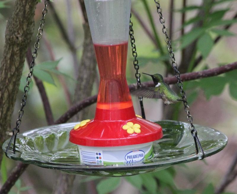 Matinée colibri ce matin Img_4111