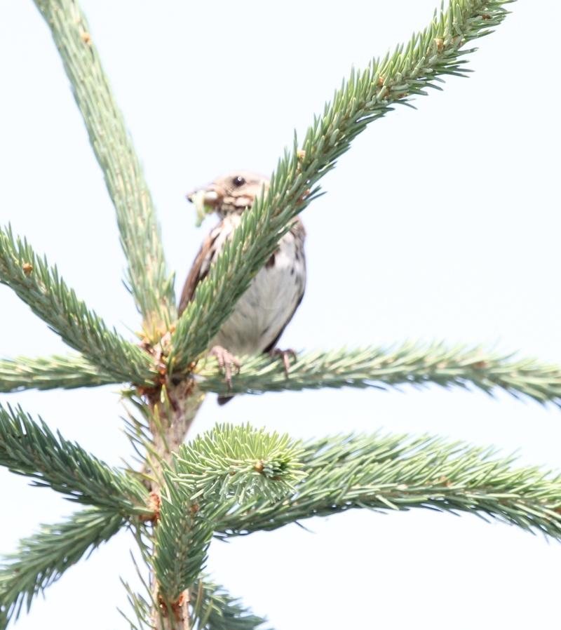 Quelqu'un a une idée pour ce petit oiseau, vu chez mon frère à Charny Img_5415