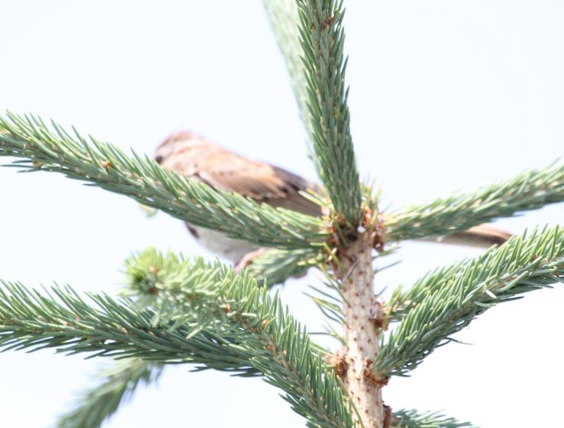 Quelqu'un a une idée pour ce petit oiseau, vu chez mon frère à Charny Img_5416