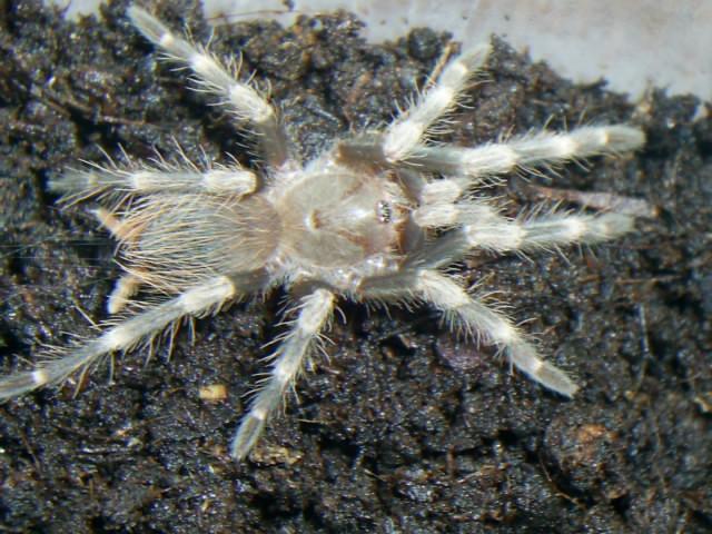 mes arachnides S4025018