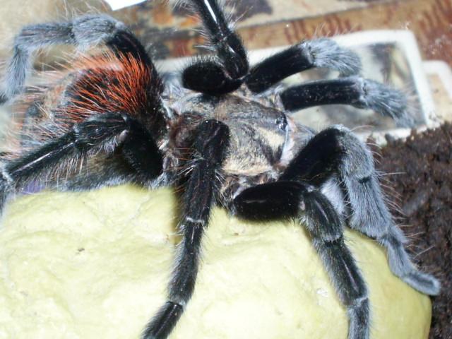 mes arachnides S4025019