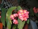 Des fleurs sur le balcon Fleurs10