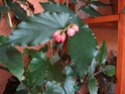 Des fleurs sur le balcon Fleurs13