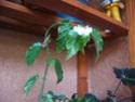 Des fleurs sur le balcon Fleurs14