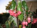 Des fleurs sur le balcon Fleurs17