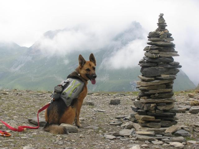 Trek - itinérance avec un chien Img_4812