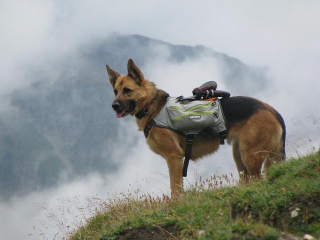 Trek - itinérance avec un chien - Page 2 Img_4825