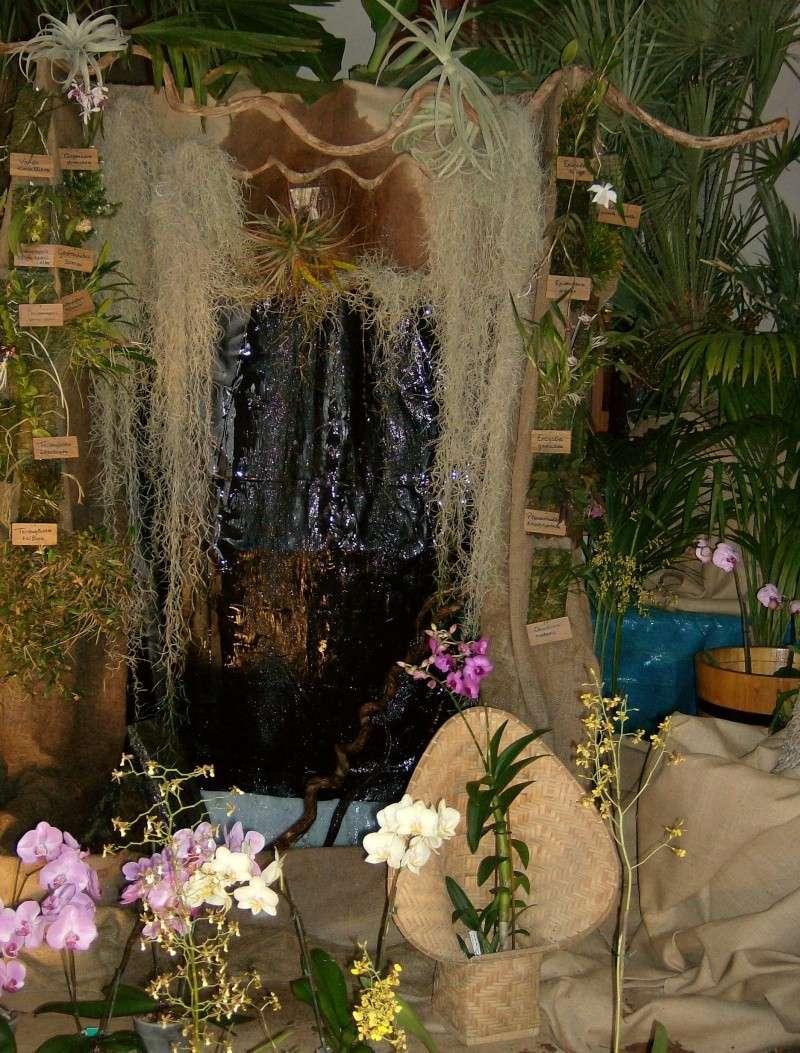 2ème salon international d'orchidées à Oudenaarde Hpim0212