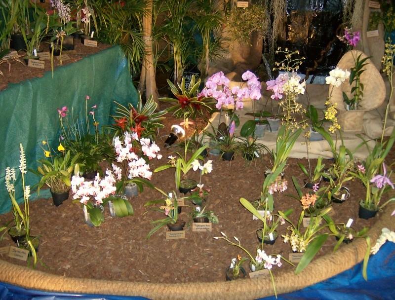 2ème salon international d'orchidées à Oudenaarde Hpim0213