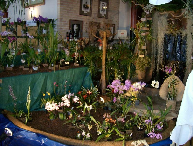 2ème salon international d'orchidées à Oudenaarde Hpim0214