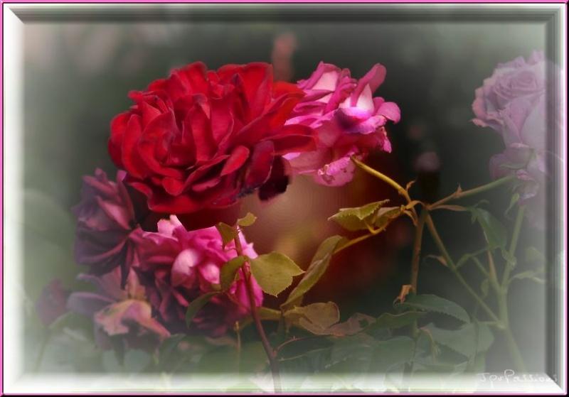 Tuto 10 _ les effets sur photo  - Page 5 P1110915