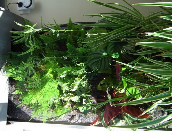 Phill : mon Premier mur végétal  Dscf1718