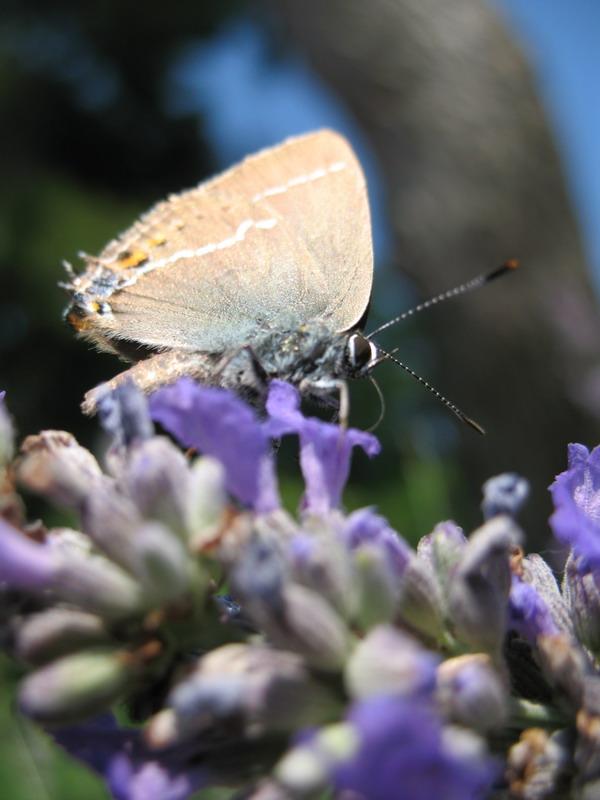 Essai papillon Img_4510