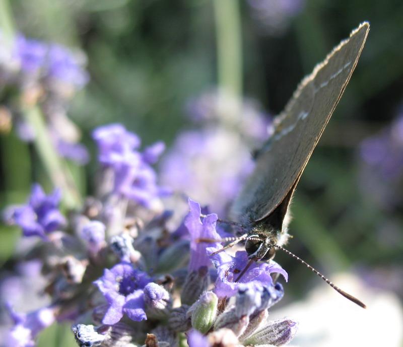 Essai papillon Img_4512
