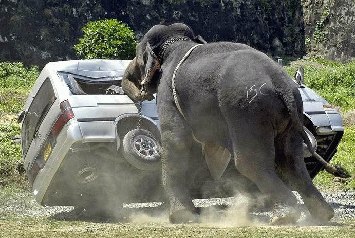 Force & beauté de l'éléphant.. 11720410