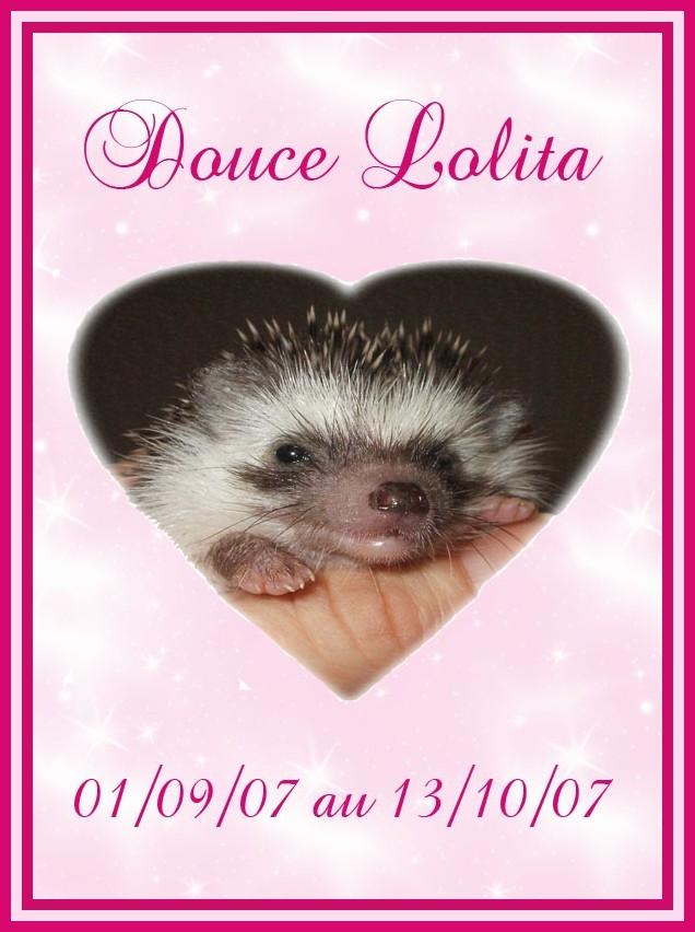 Aurevoir Lolita Lolita10