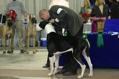 Salon national des animaux de compagnie (SNAC) - Page 3 Photo_38