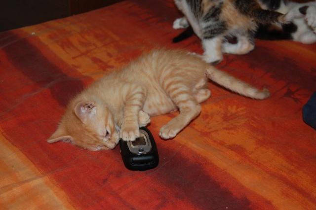 4 chatons (Mélisse, Vanille, Cacao, Saphran) Dsc_0142