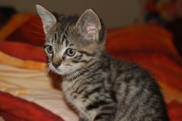 4 chatons (Mélisse, Vanille, Cacao, Saphran) Dsc_0143