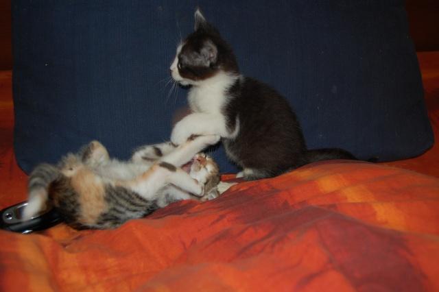 4 chatons (Mélisse, Vanille, Cacao, Saphran) Dsc_0149