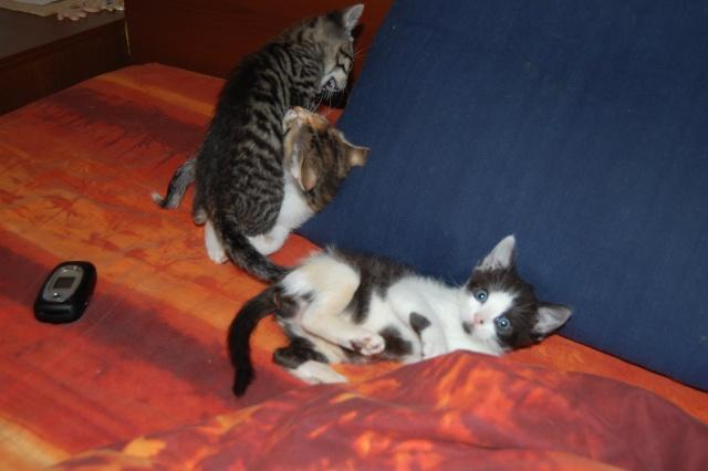 4 chatons (Mélisse, Vanille, Cacao, Saphran) Dsc_0153