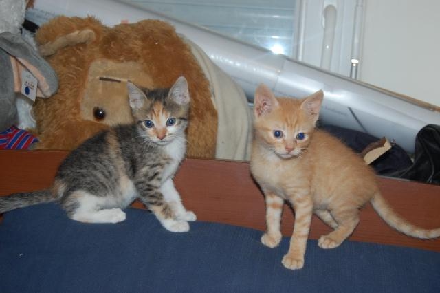 4 chatons (Mélisse, Vanille, Cacao, Saphran) Dsc_0160