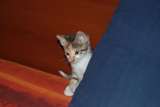 4 chatons (Mélisse, Vanille, Cacao, Saphran) Dsc_0161