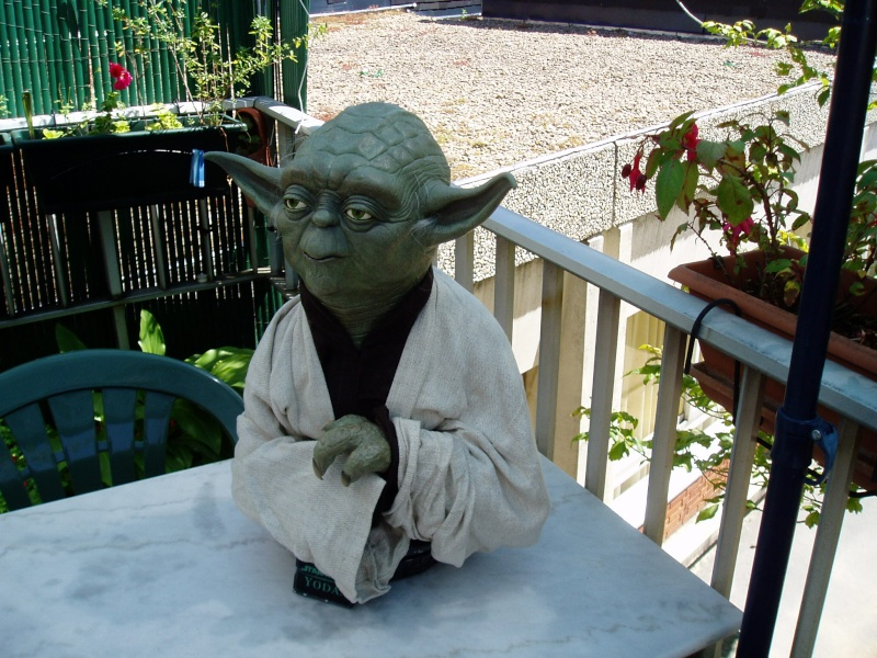 Yoda Life-Size Bust P1010012