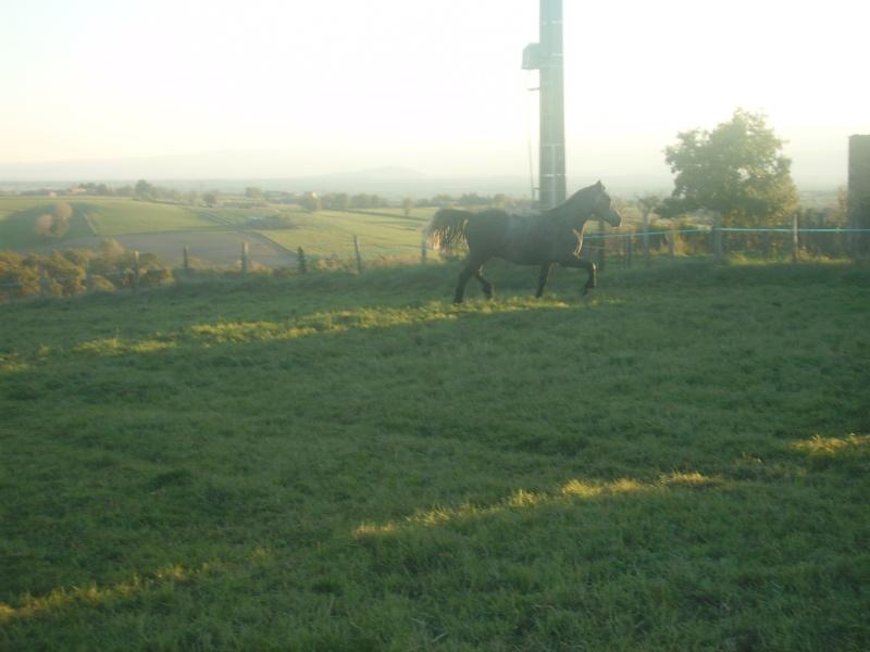 Novice dans le monde du cheval, vos avis m'intéresse ! Pict0212