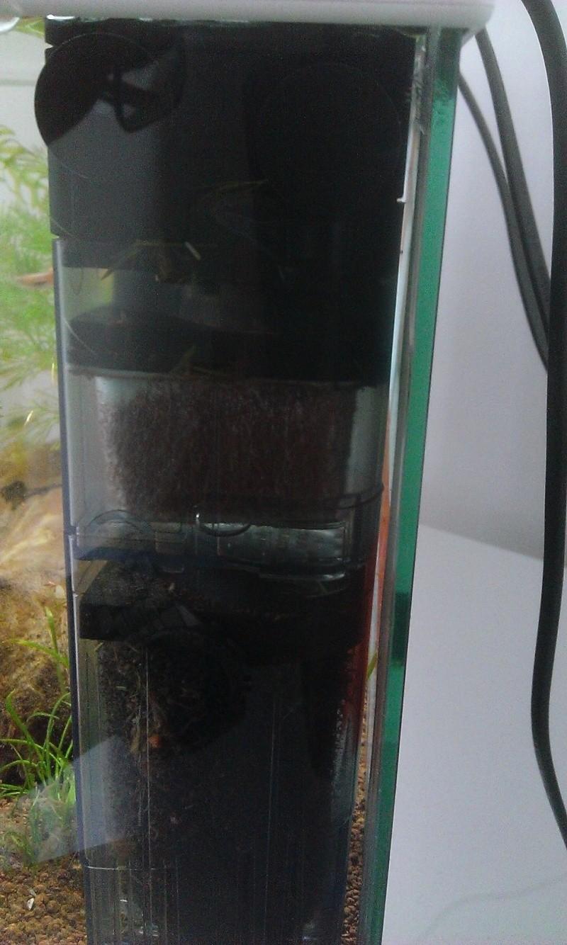 mes poissons se coincent Wp_20114