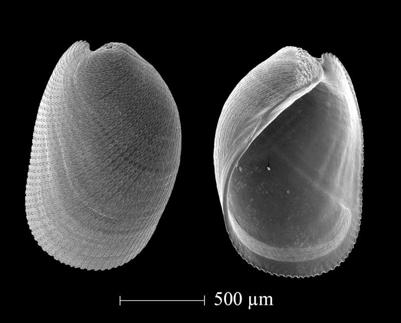 Extraction des microfossiles dans de la craie. 19-34b10