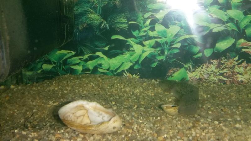 Axolotl Axolot10