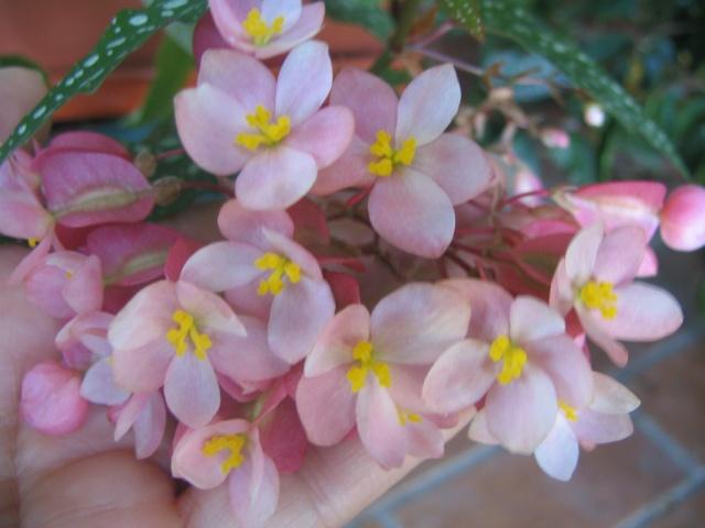 Des fleurs sur le balcon Img_0017
