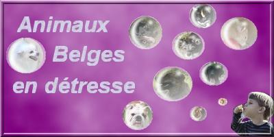 Animaux Belges en détresse