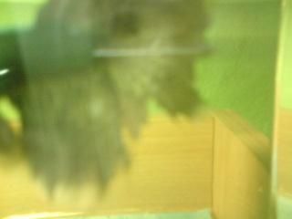 pourriture des nageoires Dsc00540
