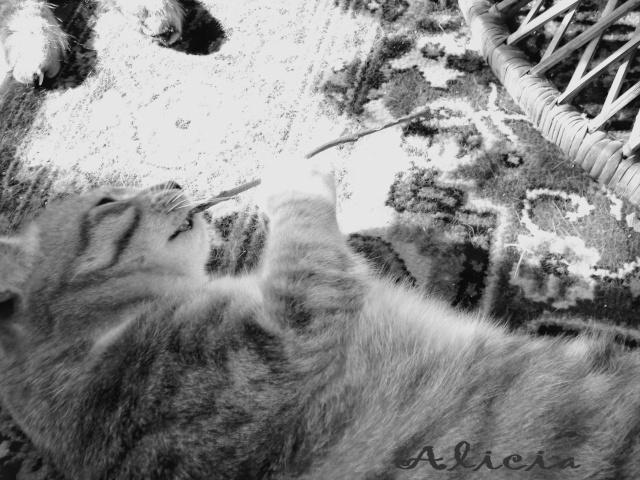 Giroflée de la Nièvre Alicia10
