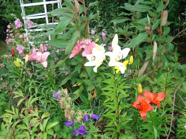 le jardin de Giroflee - Page 2 Jardin50