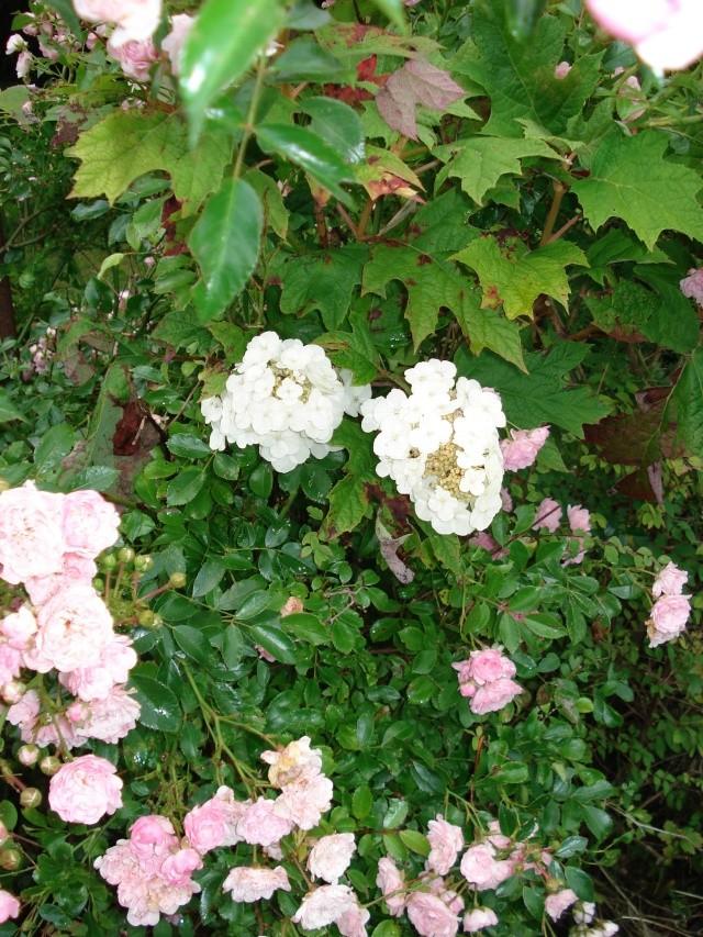 le jardin de Giroflee - Page 2 Jardin53