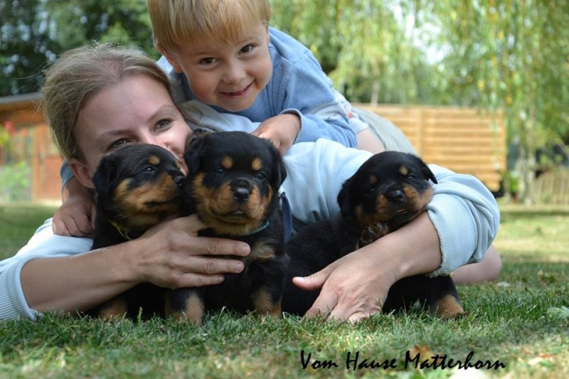 Rottweiler - Ida x Lacky 11760010