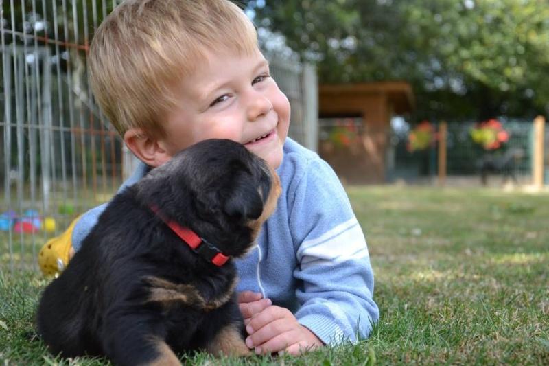 Rottweiler - Ida x Lacky 11800610