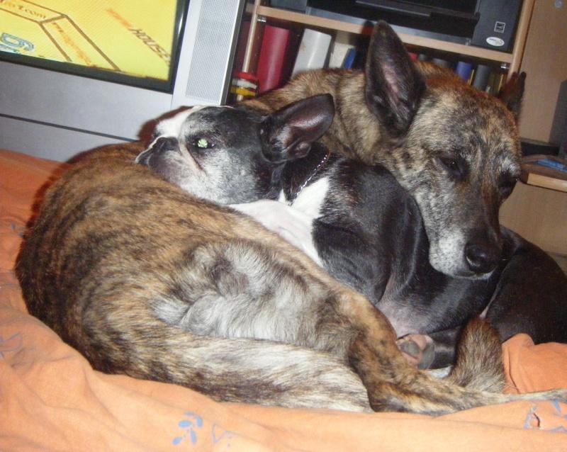 ( chien ) voila ma famille Pouchr10