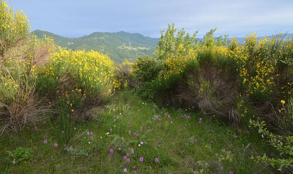 Les Ophrys tardifs d'Italie du sud Jlr_1010